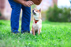 Utbildning med hunden Royaltyfri Foto