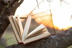 Utbildnings- och vishetbegreppet - öppna boken under solljus Arkivfoton