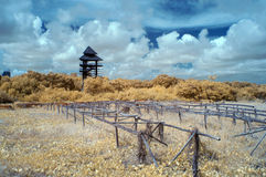Utbildningsmitt av mangroven i near infraröd stil Royaltyfria Bilder