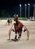 Utbildningstrotters race i hippodrome Fotografering för Bildbyråer