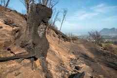 Utbränd träd-stubbe på moutainsida Arkivbild