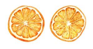 Utdragen illustration för vattenfärghand av torkade apelsiner arkivfoton