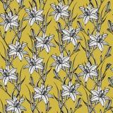 Utdragen sömlös modell för hand med lilly blommor royaltyfri illustrationer