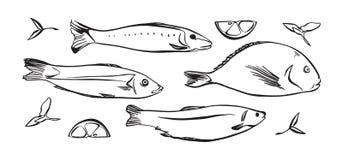 Utdragen vektorillustration för hand av fisken med citronen och örter Svart som isoleras på vit bakgrund vektor illustrationer