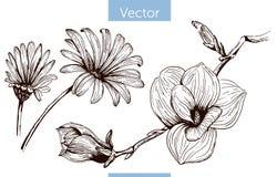 Utdragna blommor för monokrom vektorhand på vit bakgrund royaltyfri illustrationer