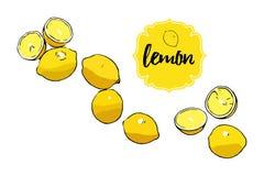 Utdragna hela citroner för tropisk läcker citrus tecknad film, halva av citronen Gult retro lageretikettemblem med text royaltyfri illustrationer