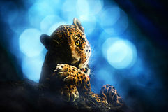 ?ute-Jaguar Lizenzfreie Stockfotografie