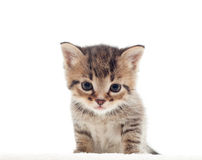 Ute kitten Royalty Free Stock Photo