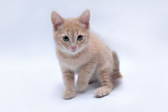 Сute little red kitten on a light background Royalty Free Stock Photos