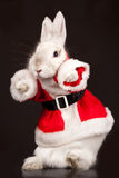 �ute rabbit in a santa costume Stock Photos