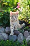 Сute red kitten Royalty Free Stock Image