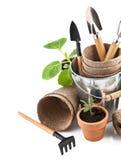 Utensilios de jardinería con los almácigos vegetales Fotos de archivo