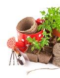 Utensilios de jardinería con los almácigos vegetales Fotografía de archivo