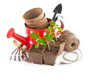 Utensilios de jardinería con los almácigos vegetales Fotografía de archivo libre de regalías