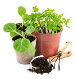 Utensilios de jardinería con los almácigos vegetales Imágenes de archivo libres de regalías
