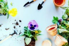 Utensilios de jardinería y una flor joven de una viola Foto de archivo libre de regalías