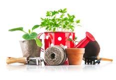Utensilios de jardinería con los almácigos vegetales Fotos de archivo libres de regalías