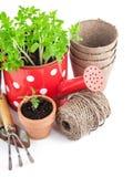 Utensilios de jardinería con los almácigos vegetales Foto de archivo libre de regalías