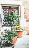Uteplatsblommakrukor med olika växter och blommor, behållare som planterar och arbeta i trädgården Royaltyfria Bilder