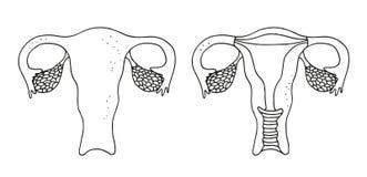 Uterus  illustration Royalty Free Stock Images