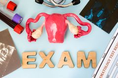 Uterus ovary and cervix gynecological examination, tests and diagnostics procedure concept. Model of female reproductive organs ex. Am surrounded by medical royalty free stock photos