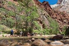 Utfärder i Zion Narrows National Park Royaltyfria Bilder