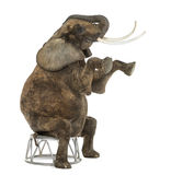 Utföra för afrikansk elefant som placeras på en stol som isoleras Royaltyfria Bilder