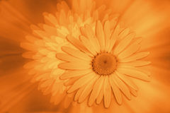 utformade blommor Vektor Illustrationer