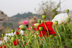 Utformar blom- bakgrund för blomman Garden Arkivbild