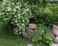 Utformar blom- bakgrund för blomman Garden Arkivfoto