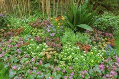 Utformar blom- bakgrund för blomman Garden Fotografering för Bildbyråer