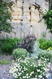 Utformar blom- bakgrund för blomman Garden royaltyfria foton