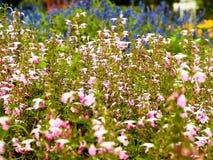Utformar blom- bakgrund för blomman Garden & x28; Tappning färgar picture& x29; royaltyfri foto