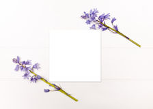 Utformat materielfotografi med blåklockor Royaltyfri Fotografi