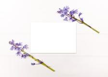 Utformat materielfotografi med blåklockor Royaltyfria Bilder