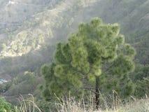 Utforskning i Himachal 4-Kasauli Arkivfoto