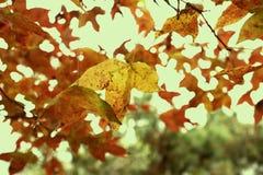 utgjuta för leaves Royaltyfria Foton