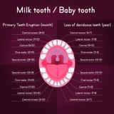 utgjutelsen för utbrott för anatomibarn visar den tand- tandtidtitlar Arkivbild