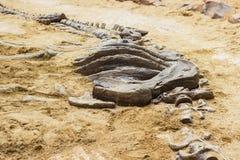Utgrävning för simulator för dinosauriefossil i sand royaltyfri foto
