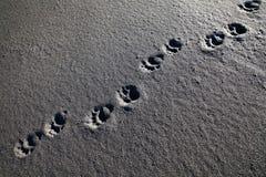 Uthärda spåret på stranden, den borttappade kusten, Kalifornien Royaltyfria Bilder