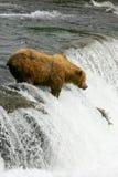 uthärdar grizzlyen Royaltyfri Bild