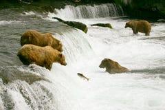 uthärdar grizzlyen Arkivfoto