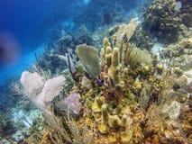 Utila礁石 免版税库存图片