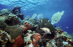 utila рифа отмелое Стоковое фото RF