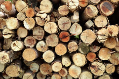 Utilice la construcción del affter de la madera del eucalipto foto de archivo libre de regalías
