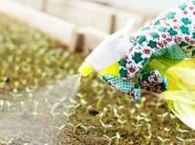 Utilisant des pesticides Photographie stock libre de droits