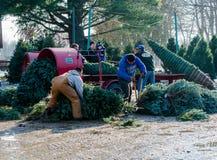 Utilisant une machine à relier d'arbre pour envelopper des arbres de Noël Photo libre de droits