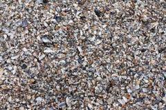 Utilisation de coquilles de mer comme fond Photos libres de droits