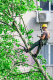 Utilitarian alpinist tree cleaner at work Stock Photography