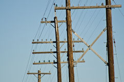 Utility Poles Standing Against a Blue Sky Stock Image